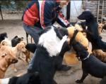 Видео из Ниша отопио срца широм света: Погледајте како се игра 400 паса, на једном месту