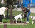 Otvoreno šetalište za pse