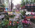 Почеле са радом још две градске цвећаре у Нишу