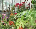 Stalna izložba cveća u Tvrđavi (VIDEO)