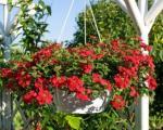 Raj na terasi: Viseće saksije cveća