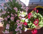 """Цвеће и лековито биље: """"Сајамски дани у Нишу"""""""