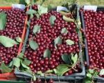 Održani Dani višnje u Lipovici kraj Leskovca