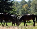 Divlji konji - poslednji čuvari Suve planine