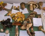 Vlasotince: Gljiva, organizam koji hrani i leči (FOTO)