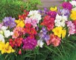 Rano proleće, pravo vreme za sadnju baštenskog cveća