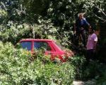 Pukla trula grana i oštetila tri parkirana automobila u Leskovcu