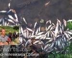 Масовни помор рибе у Топлици, ненадокнадива штета