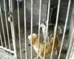 Uginuli psi bili dva meseca bez hrane i vode