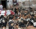 Ниш на улицу шаље 450 паса из азила!?