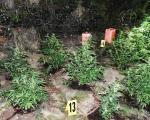 """Заливао канабис у башти крај Мерошине, а полиција """"натрчала"""""""