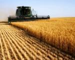 Da li je poljoprivreda naša zlatna koka?