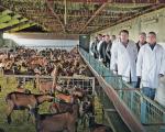 Идеја за бизнис: Из Русије дошли у Црну Траву да гаје козе