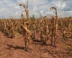 Љајић у Сокобањи: Држава ће ако треба реаговати са робним резервама због суше и града