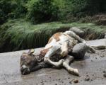 Ogromna šteta: Zbog obilnih padavina proglašena vanredna situacija u delu kuršumlijske opštine