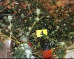 У стану Лесковчанина пронађена лабораторија за узгој марихуане