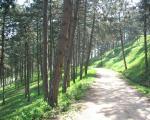 Тајне брда Хисар, недалеко од центра Лесковца