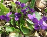 Danas u 17.15 počinje proleće