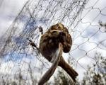 Због лова на птице завршили у затвору