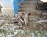 Хајка на предаторе у Разгојни крај Лесковца
