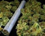 У Лесковцу и Лебану заплењено 8,5 килограма марихуане
