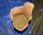 Policija zaplenila pet kilograma marihuane