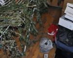 Пронађена лабораторија за узгој марихуане