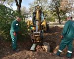 2.000 novih sadnica drveća