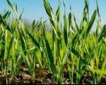 Више новца за пољопривреду