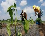 Осигурање је један од начина за заштиту пољопривредних произвођача