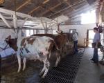 Много бољи квалитет млека у Топличком округу