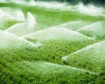 Важно за пољопривреднике: У току пријава за подстицаје у биљној производњи