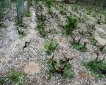Grad veličine oraha rasturio jug Srbije