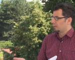 Млади лекари у Нишу склапају каблове за 25.000 динара