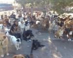 Ниш: У плану изградња регионалног азила за псе