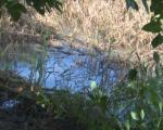 Излила се канализација у Паси Пољани