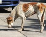 Monstrum: Vlasnik Pet-šopa izgladnjivao pse do smrti