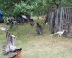 Tričkovićevo carstvo egzotičnih ptica u Pirotu