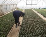 Пластеници за 40 пољопривредница у сврљишком крају