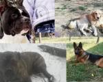 Ко краде псе у Алексинцу?