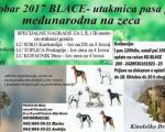 Међународна утакмица паса гонича на зечеве у Блацу