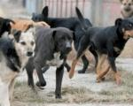 Невероватан напад паса луталица на старицу