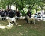 У Врању отворена 10. Међународна изложба паса свих раса