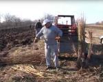 Počela sadnja novih sadnica voća i vinove loze