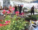 Ниш: Изложба цвећа и дендро материјала