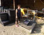 У прокупачком крају берба шљива у пуном јеку, цена стенлејке 40 динара