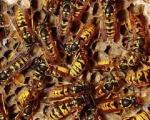Ubodi insekata