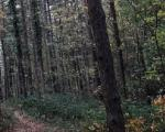 Šumskim stazama prebacivali migrante iz Bugarske u Srbiju