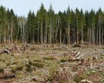 Velika šteta: Bespravna seča šuma u Toplici