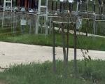 Nema odmora za vandale, ponovo polomljene sadnice drvoreda u Kuršumliji